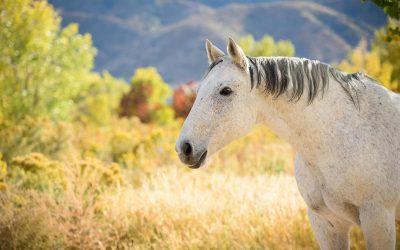Drifter the Quarter Horse