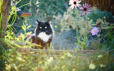 Cat photographer Denver | Artemis