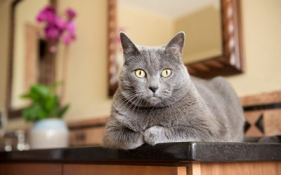 Where's the best place to photograph a cat?