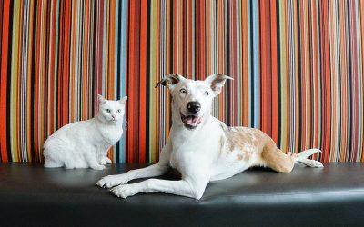Prison dog befriends rescue cat