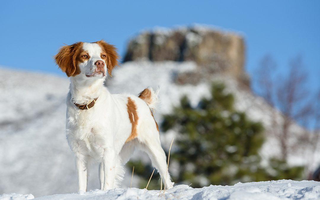 Winter Dog Photography