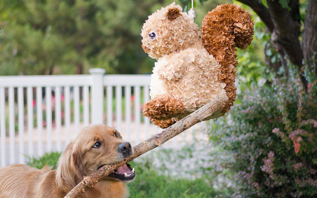 How to make a squirrel piñata