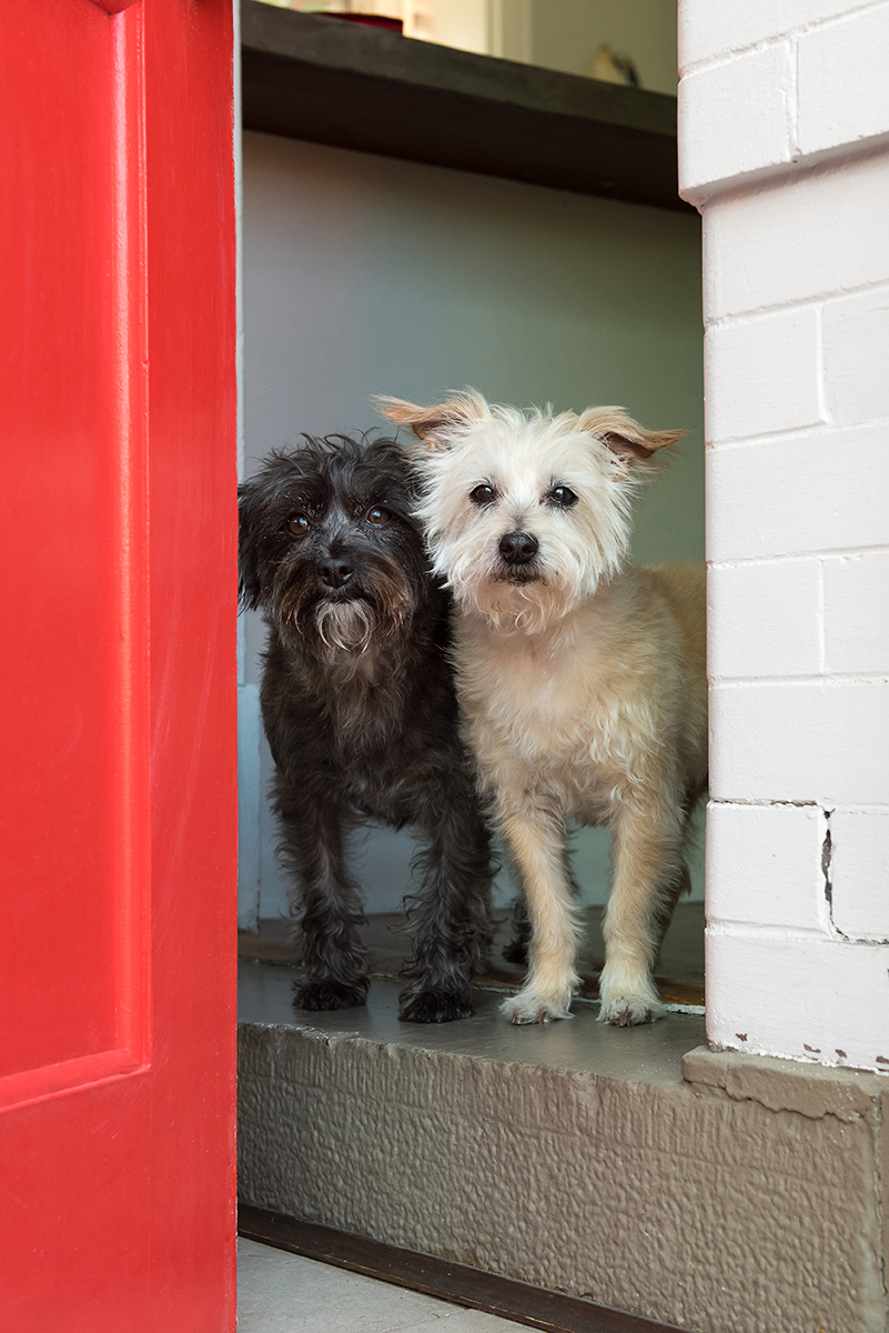 Two Terrier dogs at red door