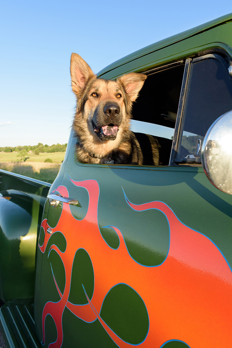 German Shepherd dog in truck with flames