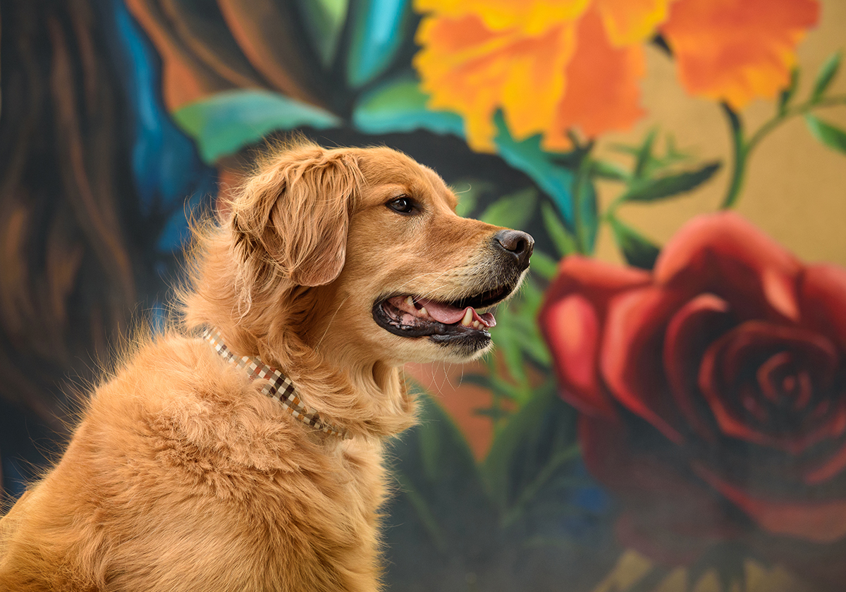 Golden Retriever dog by mural