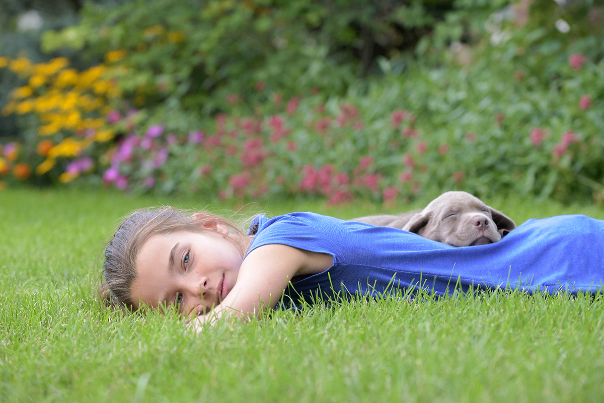 Silver Lab puppy and girl