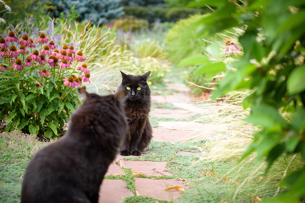 Two black cats on garden path
