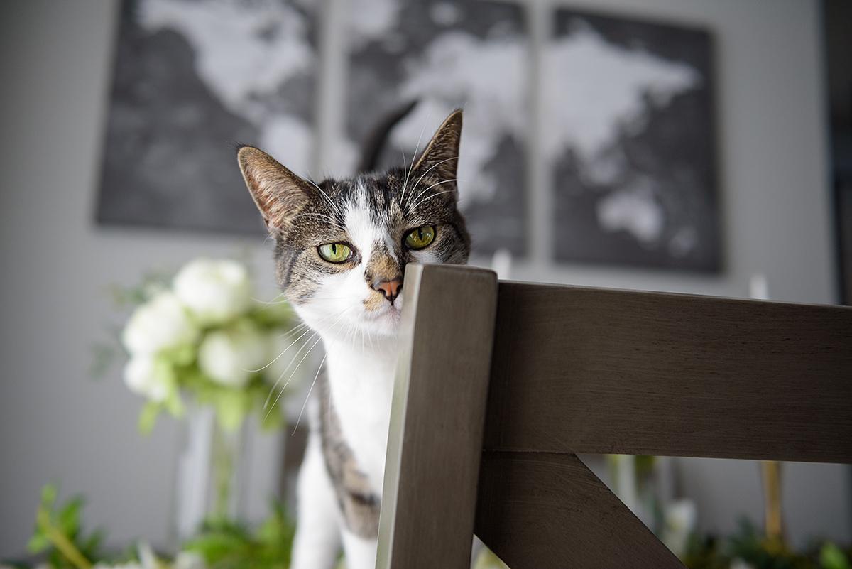 Gray cat peeking over chair