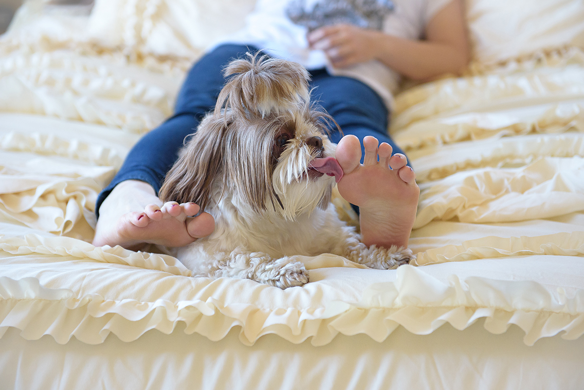 Small dog in bed licking owner's toes