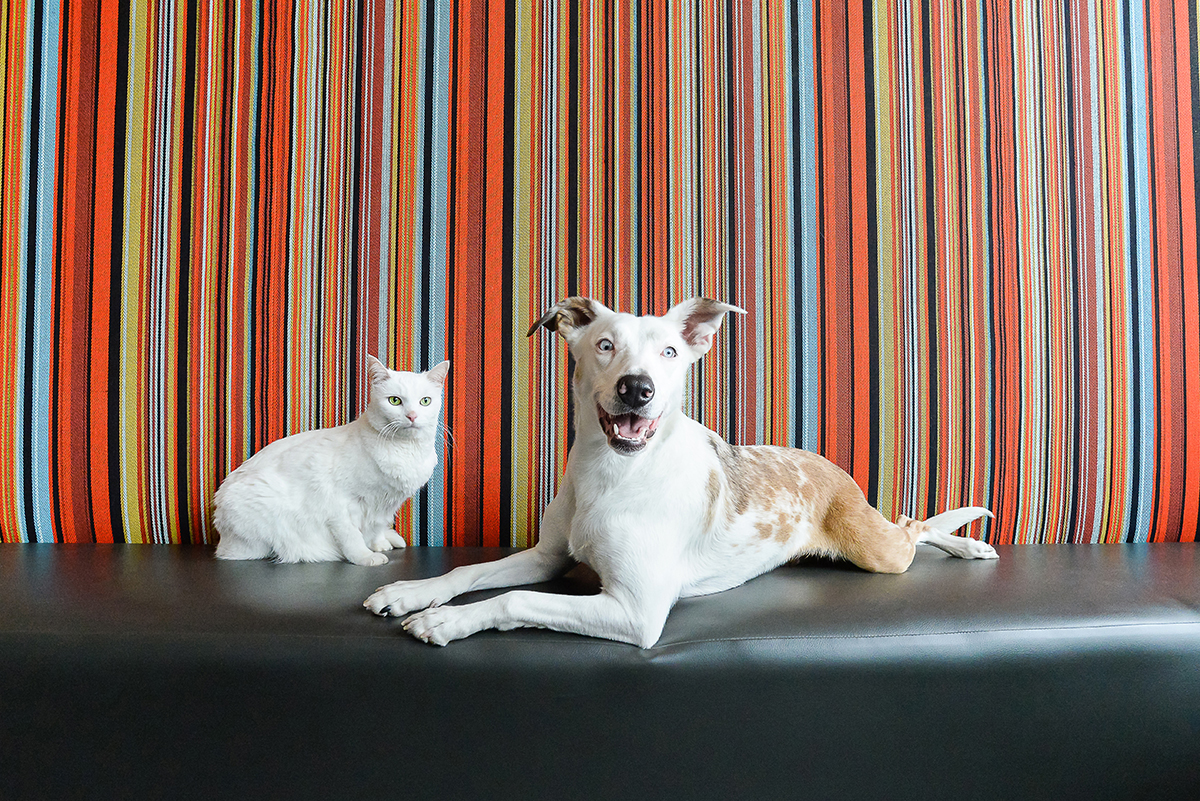 Cat and dog posing together in striped booth