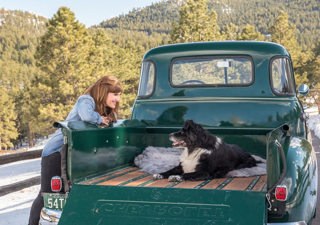 Border collie mix in bed of '52 Chevy truck