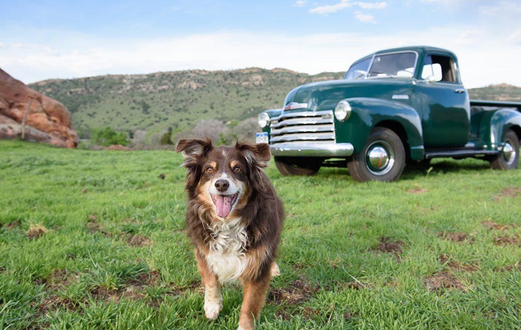 '52 Chevy truck and Aussie near red rocks
