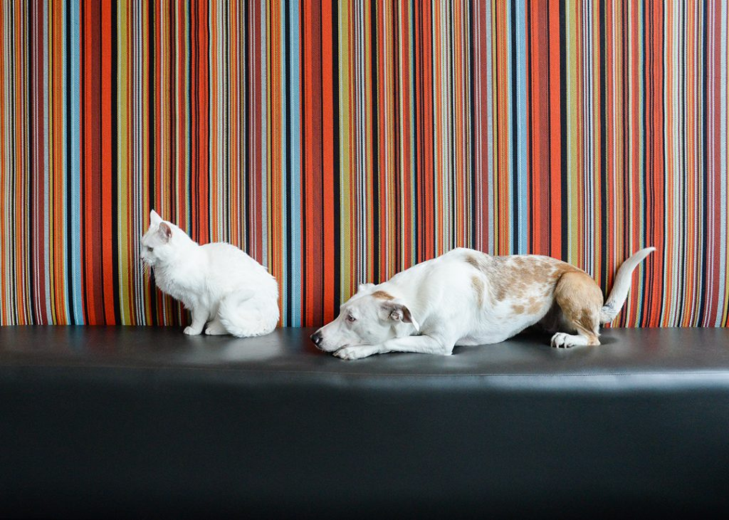 White cat ignoring white dog