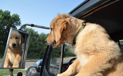 Dogs in Vintage Trucks: It's a Colorado Thing