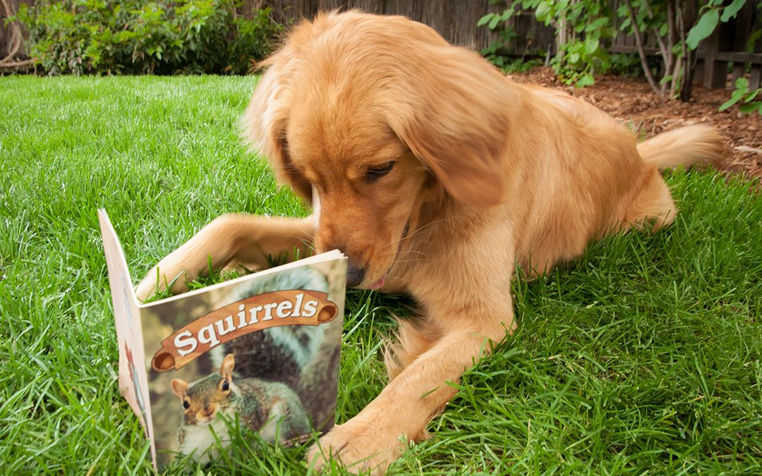 Book Club for Dogs