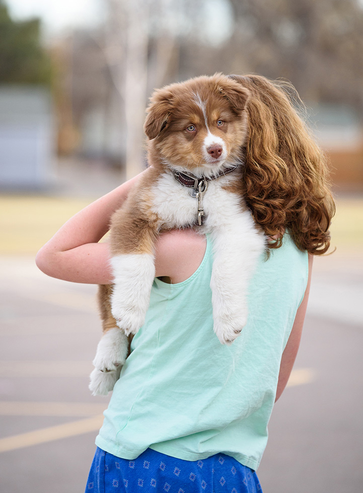 Australian Shepherd puppy with child