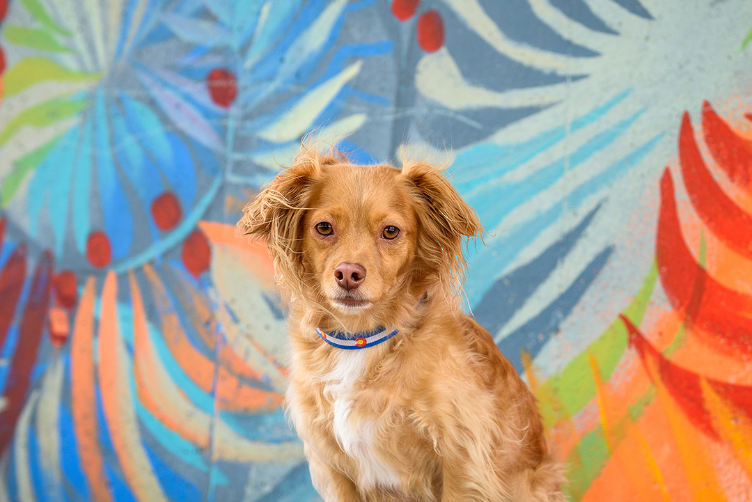 Small dog in front of colorful mural