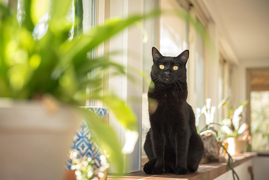 Black cat sitting on windowsill with plants