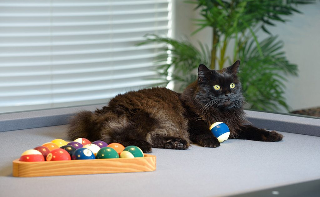Black cat on pool table, showing how pops of color look great when photographing black cats